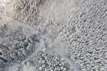 aerial view of the mountain forest landscape in winter Archivio Fotografico - 117006394