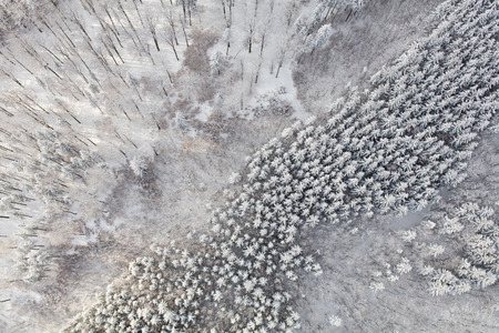 aerial view of the mountain forest landscape in winter Archivio Fotografico - 117006396