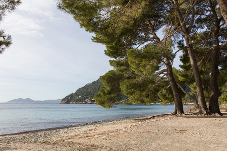 seaside beach trees Stok Fotoğraf