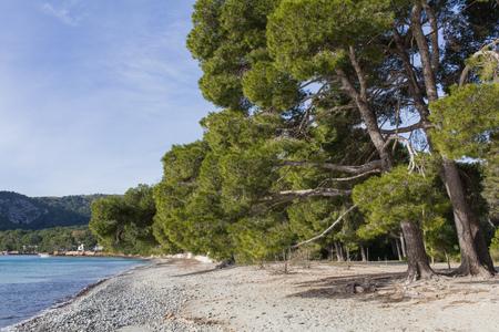 seaside beach trees Archivio Fotografico - 119668344
