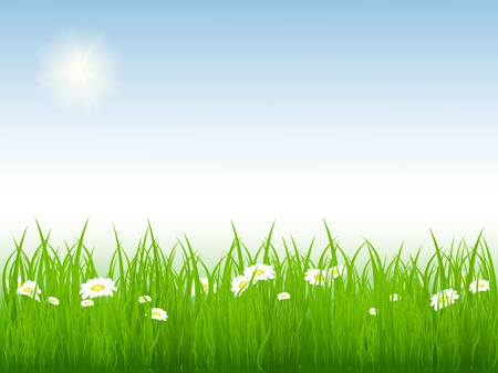 vector illustration of bright summer meadow. No mesh used. Elements for your design Stock Vector - 4262093