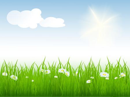 vector illustration of summer bright meadow. No mesh used Stock Vector - 4344757
