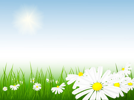 bright vector summer scene with chamomiles and grass Vector