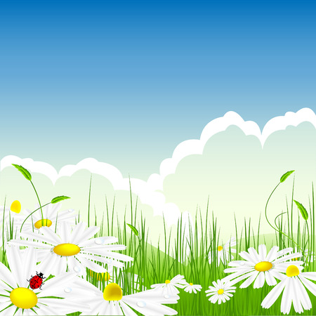 bright summer scene in the meadow with chamomilles and water drops Vector