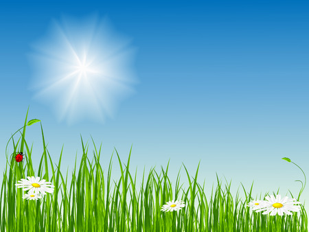summer vector scene on the fresh meadow. No mesh used Stock Vector - 4794830