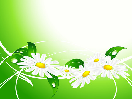 vector summer background with  chamomiles and copy space Stock Vector - 6195756