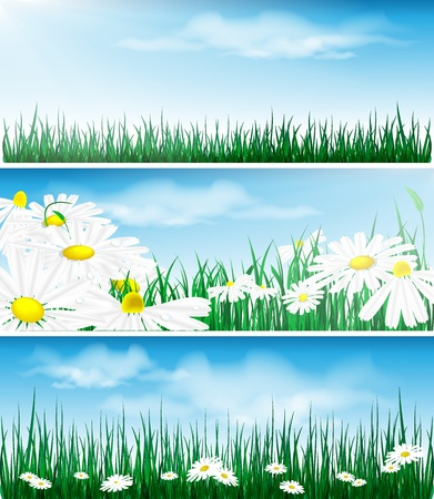 floral backgrounds with grass and flowers. Eps10 Stock Vector - 10782615