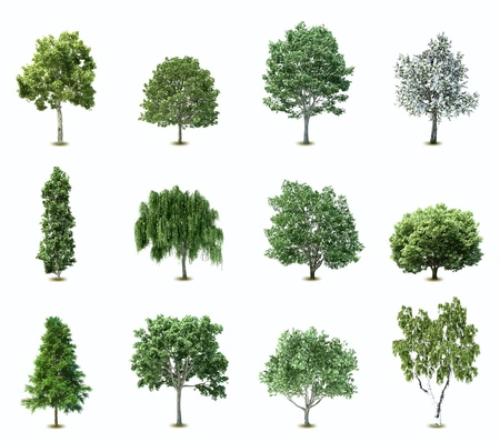 Ilustración de un conjunto de variedad de árboles