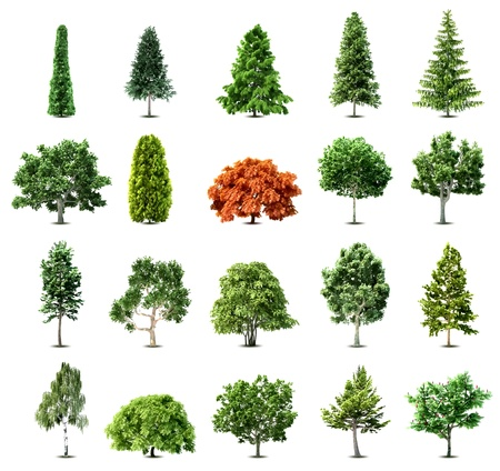 Set of trees isolated on white background  Stock Vector - 12718623