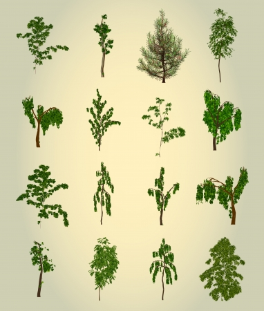 Set Tree  Element for design  Vector Vector