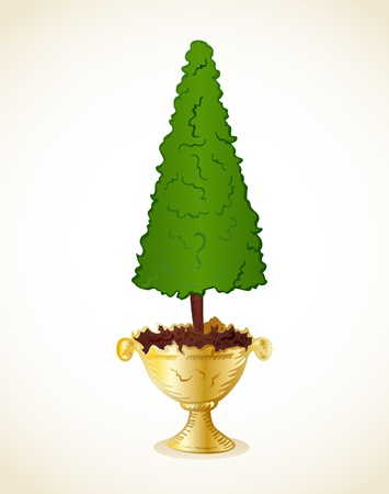 hedge trees: Amenity tree in pot background