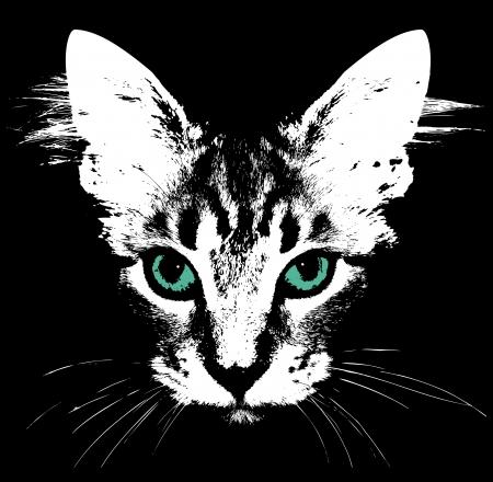 ojo de gato: Cabeza de un gato con los ojos verdes Vector Vectores