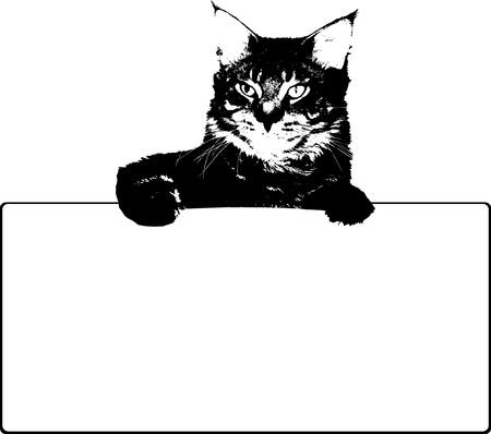maine cat: Gato negro con marco Vector