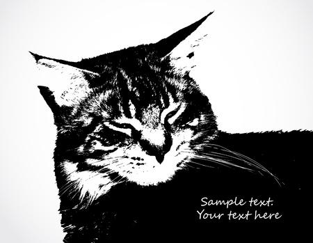 maine cat: Black cat  Vector