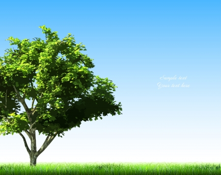 Summer background with grass and tree  Vector Stock Vector - 15121209
