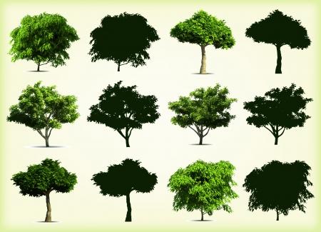 leafy trees: Colecci�n verde �rboles ilustraci�n vectorial