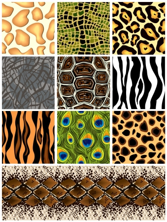 crocodile skin: Set seamless patterns animals  Vector