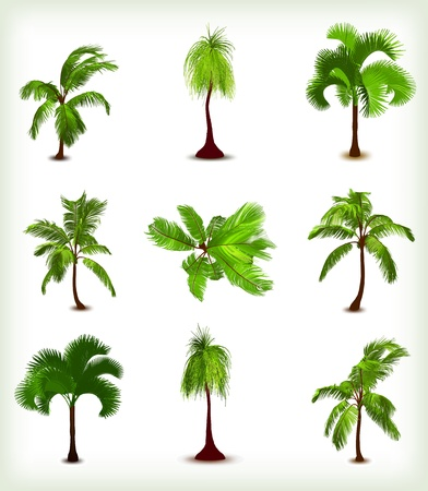 Set of various palm trees  Vector illustration Vector