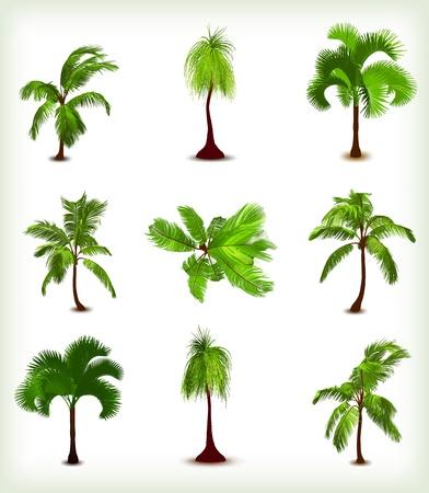 Set of various palm trees  Vector illustration Illusztráció