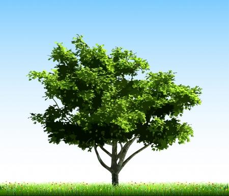 chobot: Zelený strom na trávě Ilustrace