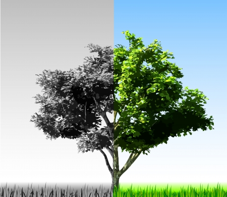 Two colorful halves of the tree Stock Vector - 15544372