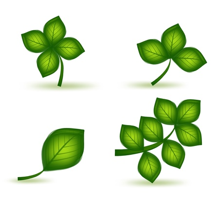 Set green leafs Stock Vector - 15768574