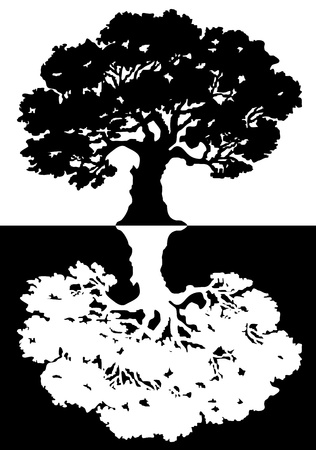 tree drawing: Two black and white trees  Vector Illustration