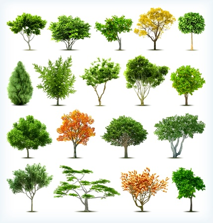 Set of trees isolated  Vector