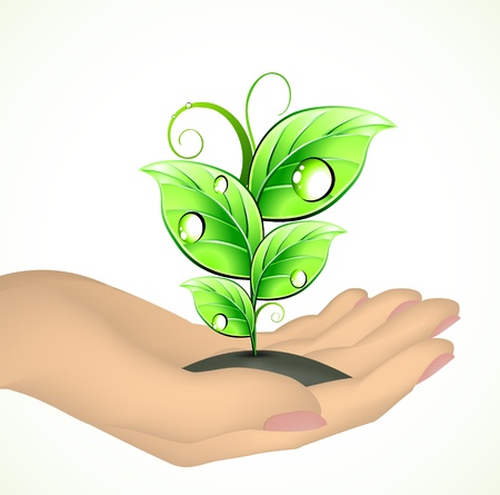 Hand and a plant  Vector Vector