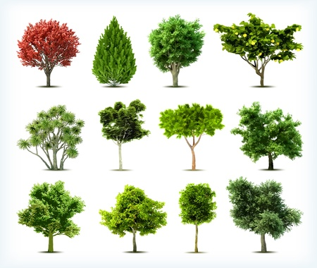 Set of trees isolated  Vector Vector