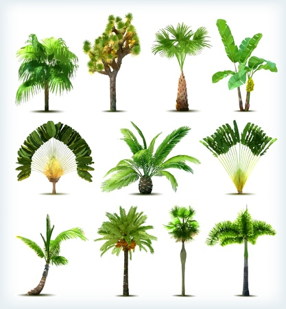 Set of various palm trees. Vector illustration Çizim