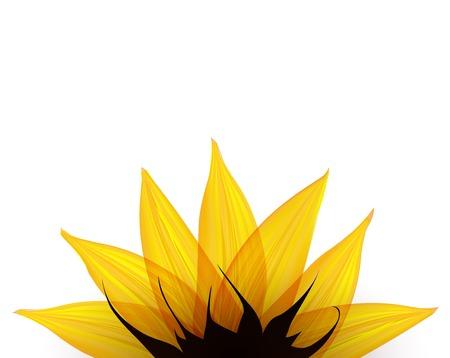 Sunflower part.