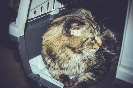 cat carrier: cat inside pet carrier in airport