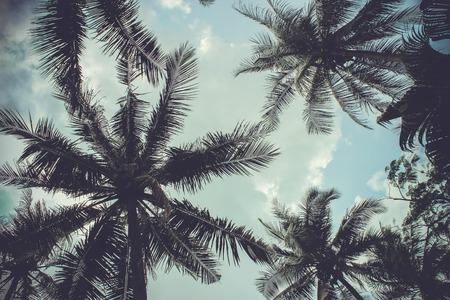 arbol: ramas de palmeras de coco bajo el cielo azul Foto de archivo