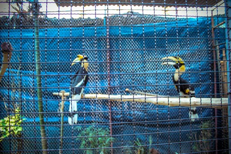 exotic birds behind cells in zoopark