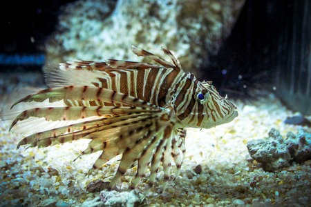 Underwater image of coral reef and Masked Fish photo