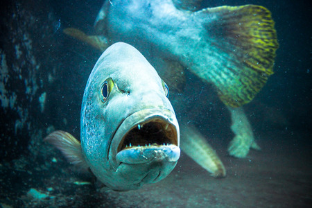 exoticism saltwater fish: Underwater image of coral reef and Masked Fish Stock Photo