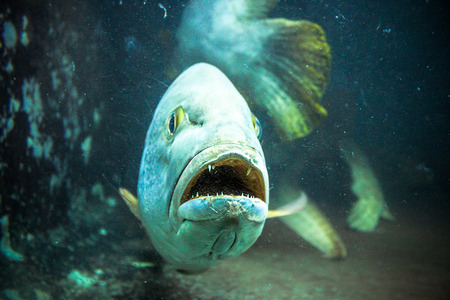 anubias: Underwater image of coral reef and Masked Fish Stock Photo