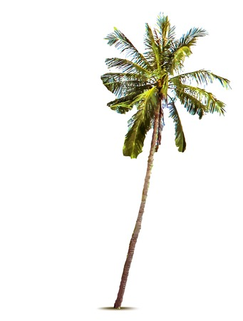 Palm tree. Vector illustration Vector