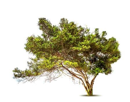 Grünen Baum. Vektor
