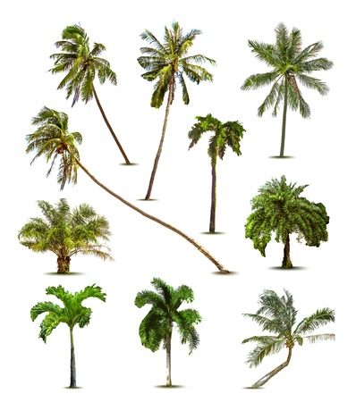 front: Different tropical palm trees. Vector
