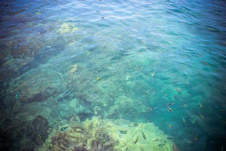 basslet: vista desde arriba de peces de colores en la luz ondulaci�n del agua verde.