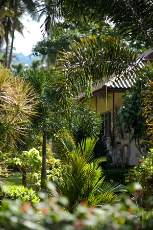 House in a Rural Area of Koh Samui photo