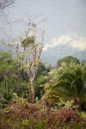 knocked out: trees and grass in a tropical rain forest