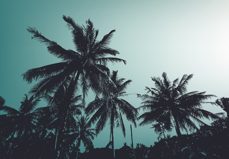 Vintage palm trees. Vector background  イラスト・ベクター素材