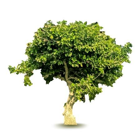 Vector green tree Vector