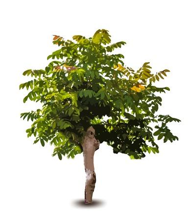 Green tree. Vector Vector