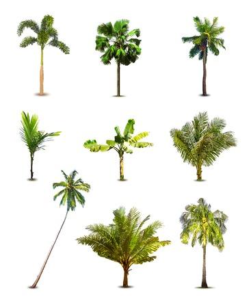 arbre vue dessus: Différents palmiers tropicaux. Vecteur