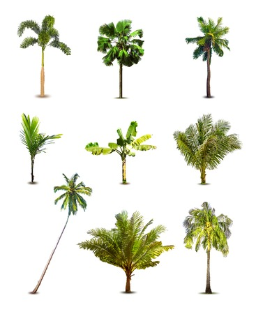 front view: Different tropical palm trees. Vector