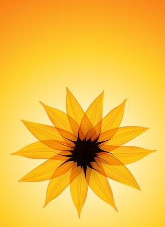 golden daisy: Girasol en el fondo vector verde
